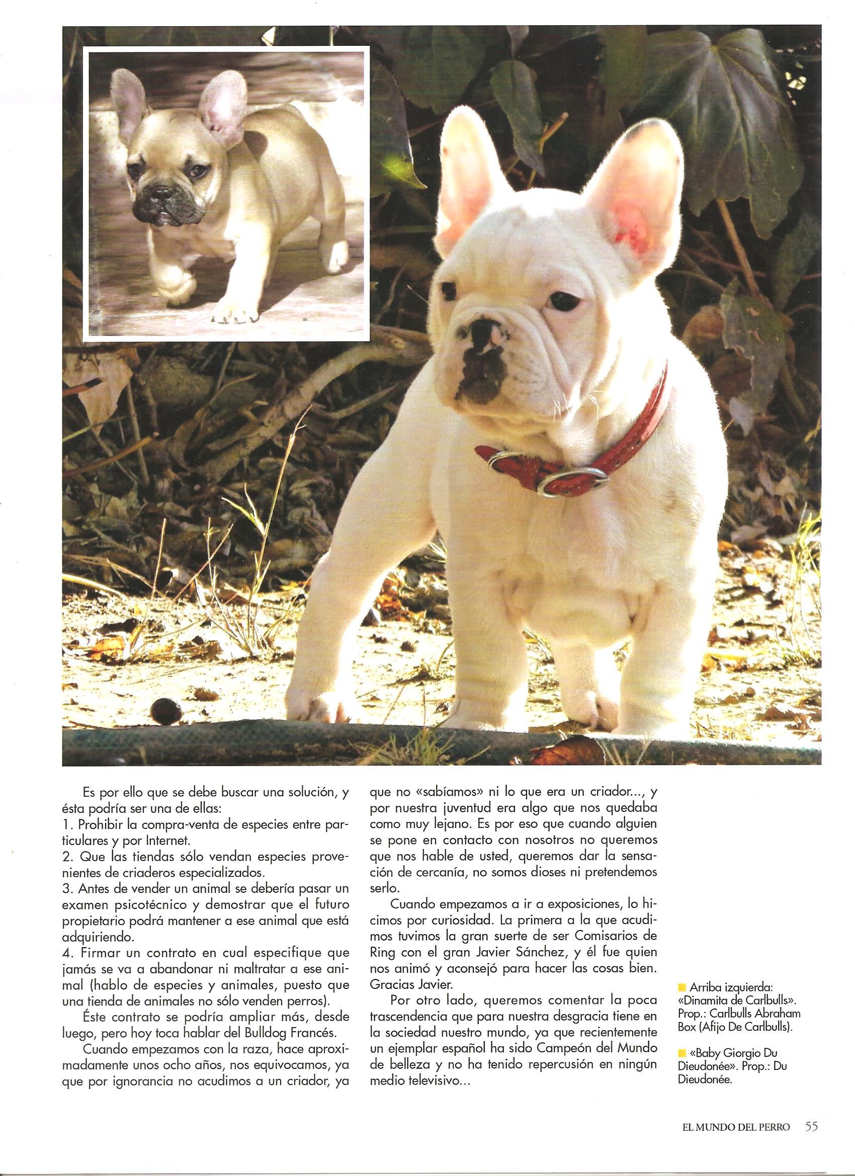 2014 marzo el mundo del perro