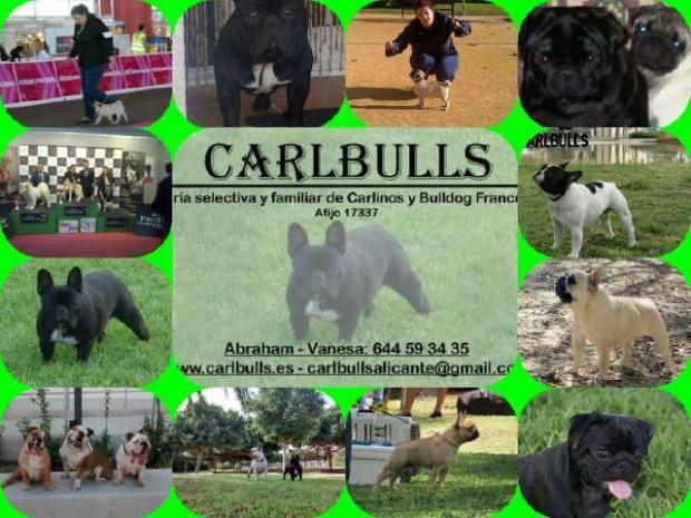 carlbulls